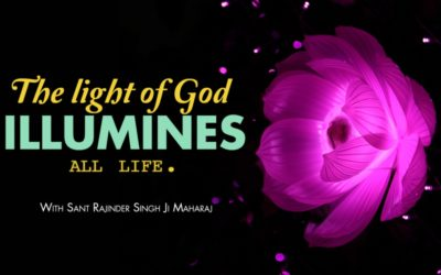 The Light Illumines All Life